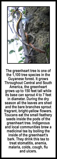 greenheartinfo