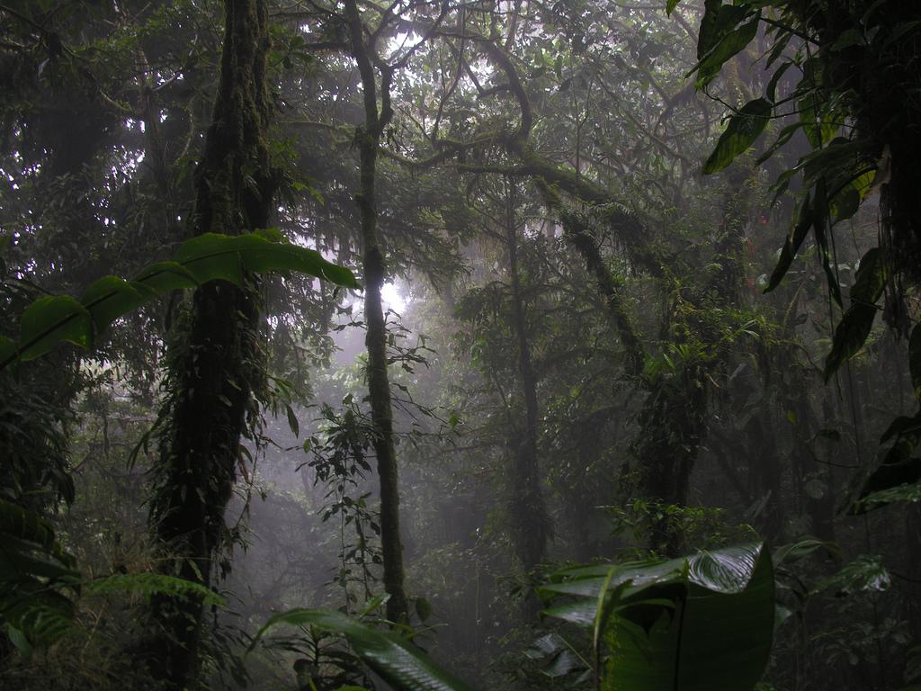 Dead Rainforests Video